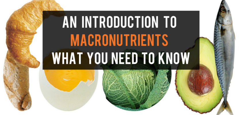 An Introduction to Macronutrients: What you need to know