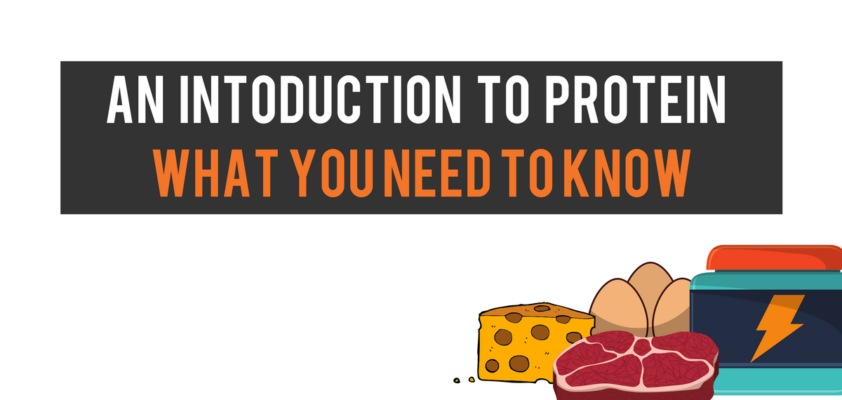 An introduction to protein - what you need to know